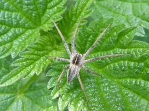 44 12 Une belle araignée