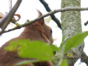 53 19 Ecureuil roux