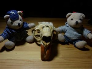 58 07 Crâne de ragondin vu de face