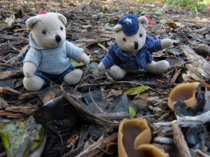 60 06 Un drôle de champignon