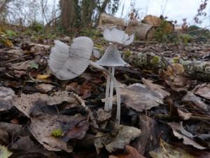 62 25 Des champignons