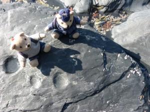 77.1 46 Les petizours et le fossiles