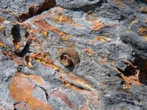 79.2 08 Gastéropode