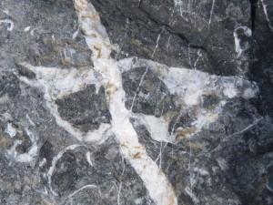 79.3 42 Schistes et calcaire de l'armorique Brachiopodes