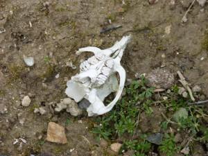 85 43 Un crâne