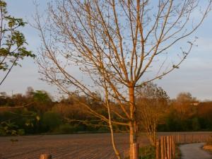 94-2-71-un-arbre