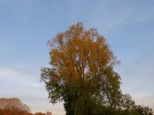 94-2-72-un-autre-arbre