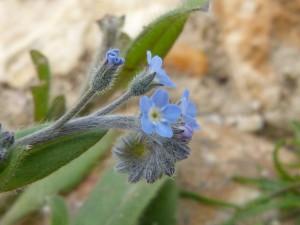95-06-la-botanique