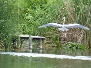 100-14-un-heron-cendre