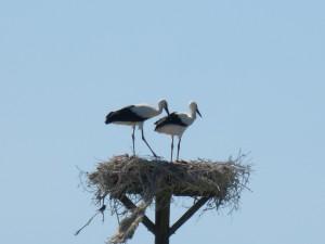 111 08 Deux petits dans le nid