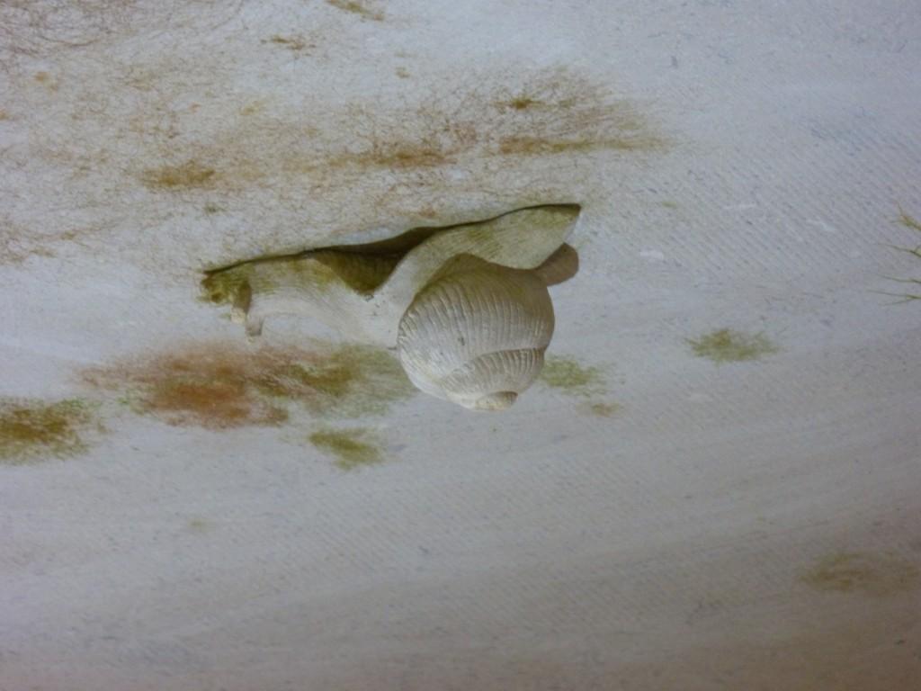 HS3 160 Un escargot
