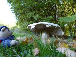 44 20 Un gros champignon