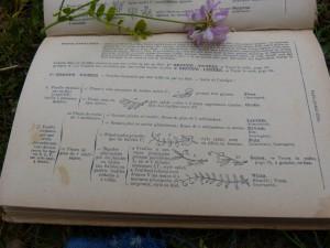 50 12 La botanique
