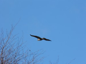 57 33 Buse variable