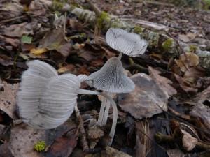 62 26 Des champignons