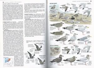 76 1 40 Guide ornitho