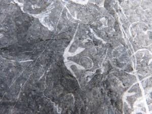 79.3 43 Schistes et calcaire de l'armorique Brachiopode