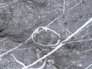 79.3 44 Schistes et calcaire de l'armorique Brachiopode