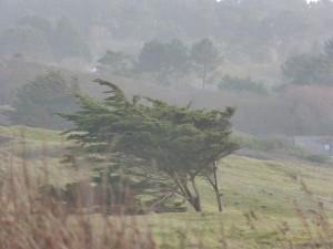79.3 79 Un arbre