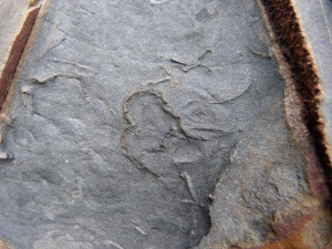 80 49 Trilobites