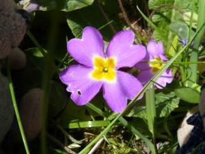 86.1 57 Une jolie fleur