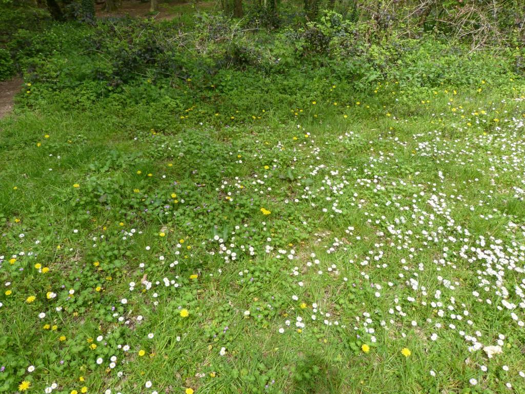 90-38-une-petite-pelouse