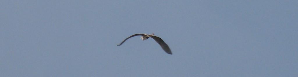 91-25-heron-cendre