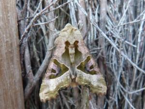 95-89-un-papillon