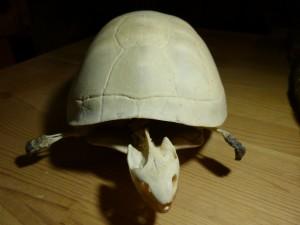 101 07 La tortue