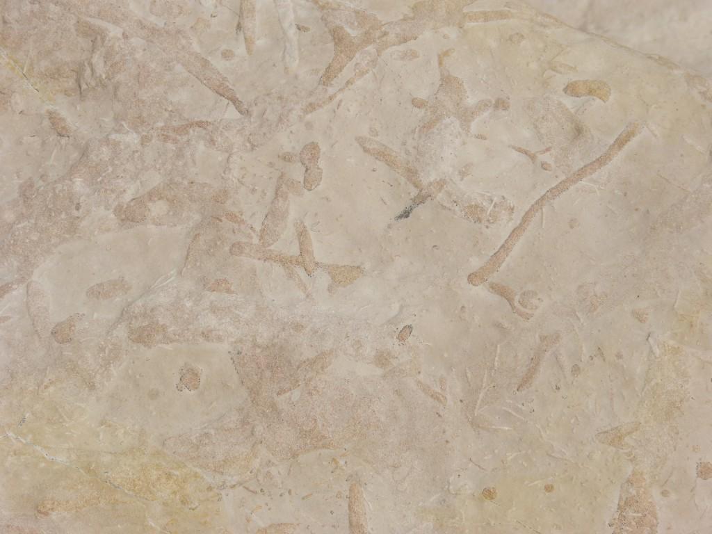 105-1 24 Terriers fossilisés