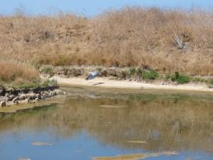 107-1 04 L'envol du heron