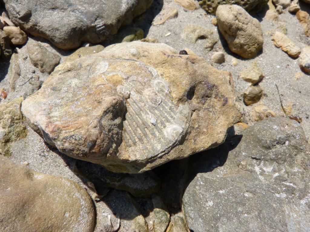 107-2 03 Un fossile