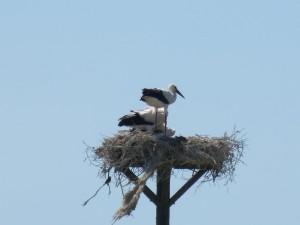 111 07 Deux petits dans le nid